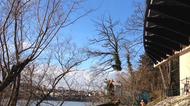 Die Förster befestigen das Drahtseil – und dann fliegt die Baumkrone davon.