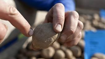 Ein Landwirt bestellt im Seeland im Kanton Bern sein Kartoffelfeld (Archiv)