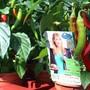 Die Gärtnerei in Lengnau stellt Pflanzen im Abholbereich kontaktlos bereit. (Archivbild)