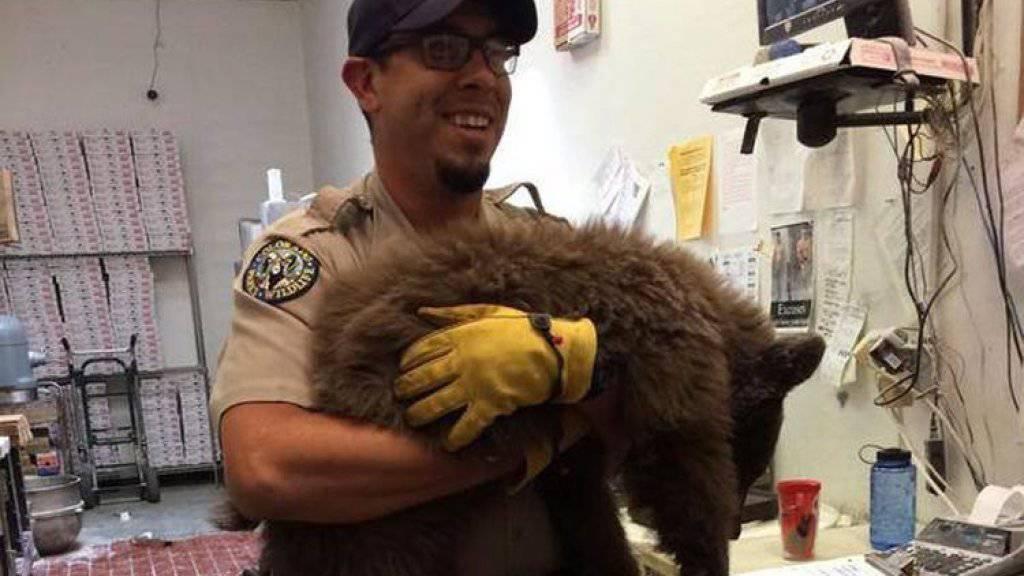 Ein Mitarbeiter der Wildbehörde trägt das betäubte Bärenbaby aus der Küche, in die es eingedrungen war.