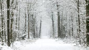 Der Wald nimmt eine zentrale Rolle im neuen Klimaschutzprojekt ein.
