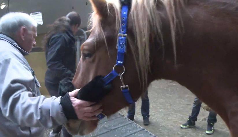Happy End für die 33 Pferde im Jura: Die im Stich gelassenen Tiere treten mit neuen Besitzern Weg in eine unbeschwerte Zukunft an.