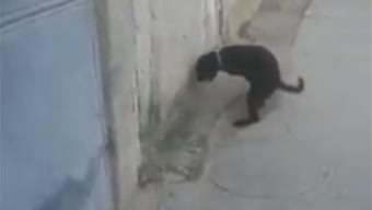 Auf frischer Tat ertappt: Dieser Hund lässt sich beim Masturbieren nicht stören.