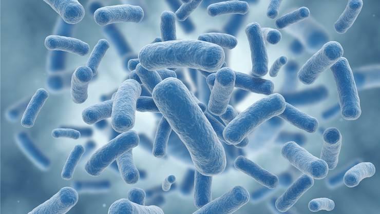"""Vorbild für """"C. crescentus-2.0"""" ist das natürlich vorkommende, ungefährliche Bakterium Caulobacter crescentus, das sich in Gewässern wie im Zürichsee findet."""
