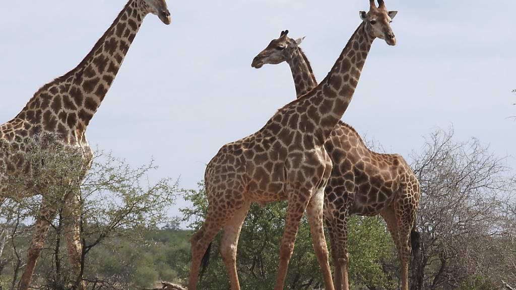Artenschutzkonferenz bringt Verbesserungen