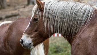 Ein Pferd ist am Samstag bei Laufen BL vor einen Zug geraten. Es wurde dabei so schwer verletzt, dass es noch am Unfallort verstarb. Personen kamen keine zu Schaden. (Symbolbild)