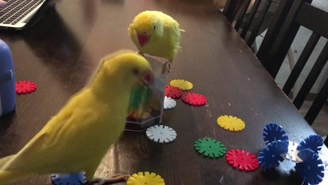 Vögel vermisst!