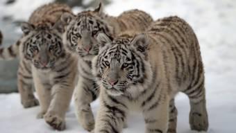Tiere des Sikyparks im Winter 2018/2019