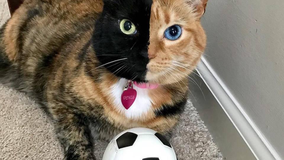 Hässig und musikalisch – frohen Weltkatzentag!