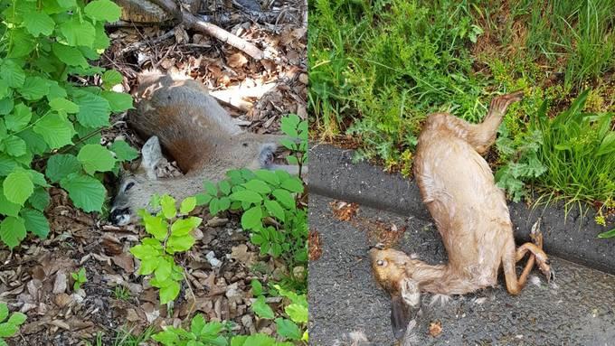 In fünf Tagen fanden Wanderer vier tote Rehe im Wald bei Dulliken.