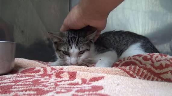 Kätzchen steckt in zerbrochenem Glaskrug fest – und miaut herzzerreissend bei der Rettung