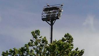 Störche nisten auf dem Flutlicht des Sportzentrums Zuchwil