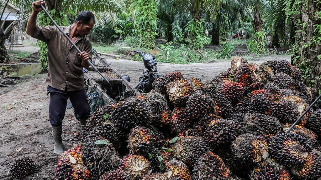 Kontroverse um Indiens grosse Palmöl-Pläne