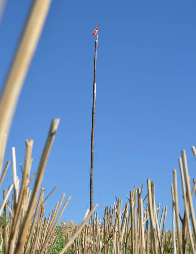 Mehr als vier aufeinander gestellte Bäume ergeben die Riesenfinnenfackel, welche am Freitag im Unterniesenberg angezündet wird.