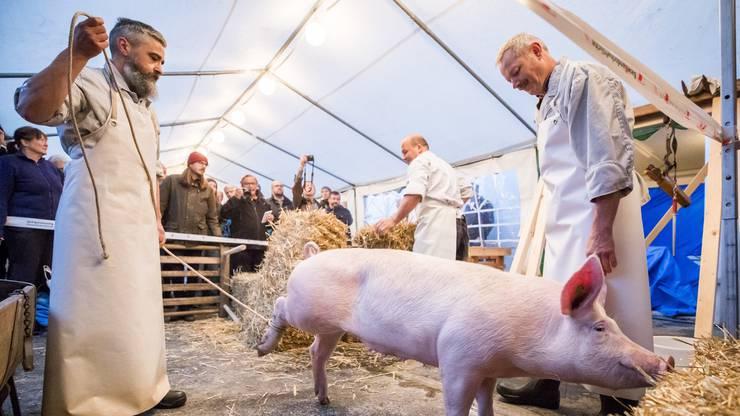 Ein Schwein kurz vor der Schlachtung, am Samstag, den 28. Oktober 2017 in Sissach. Die Metzgerei Haering zeigt in einem Hinterhof an zwei Schweinen die Hausmetzgete wie sie frueher Tradition war. (KEYSTONE/Christian Merz)