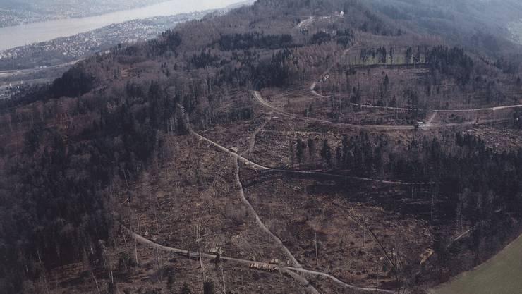 Blick auf den Üetliberg nach dem Sturm Lothar vom 26.12.1999: «Es sah aus wie auf einem Schlachtfeld.»