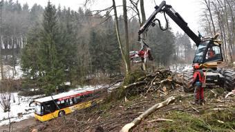 Förster müssen Bäume fällen – sie wurden zum Sicherheitsrisiko für Autos