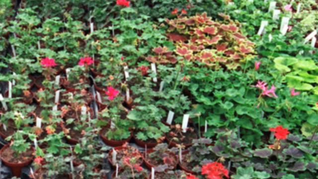 Kann Musik das Wachstum von Pflanzen beeinflussen?