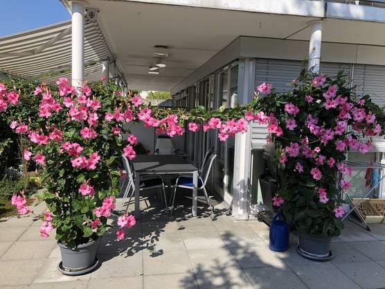 Blütenpracht in Dättwil