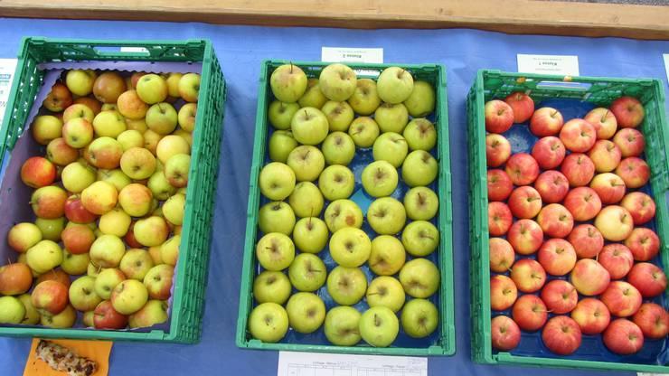 Jonagold (2. Klasse, links), Golden Delicious (2. Klasse, Mitte), Gala (1. Klasse, rechts), am Schlieremer Herbstmarkt.