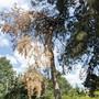 Wegen dem Hitzesommer 2018 sind viele Bäume vertrocknet und müssen aus Sicherheitsgründen gefällt werden. (Symbolbild)