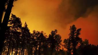 In Belgien wütet ein Waldbrand in grossen Teilen eines Naturschutzgebietes.
