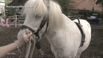 Solothurner Ehepaar ist wegen Tierquälerei vor Gericht.