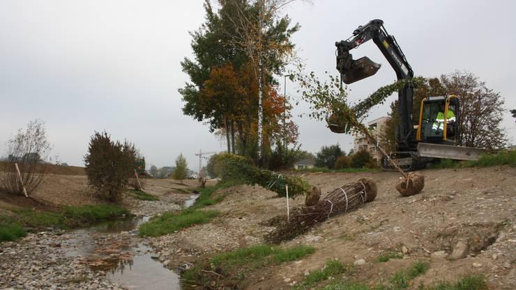 Die Bepflanzungsarbeiten starteten am Mittwoch und dauern voraussichtlich noch bis nächste Woche.