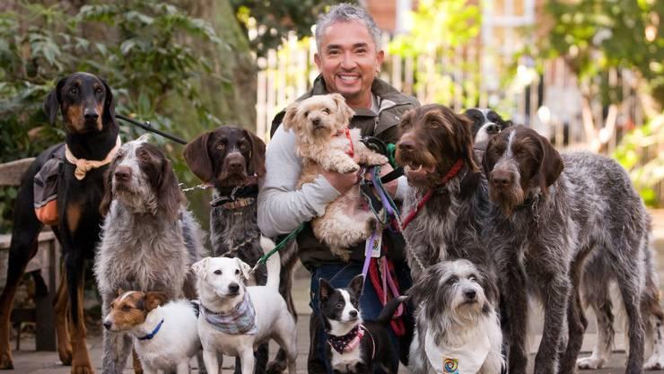 So sieht sich Cesar Millan am liebsten: Als freundlich lächelnder «Rudelführer» inmitten einer Gruppe von Hunden.