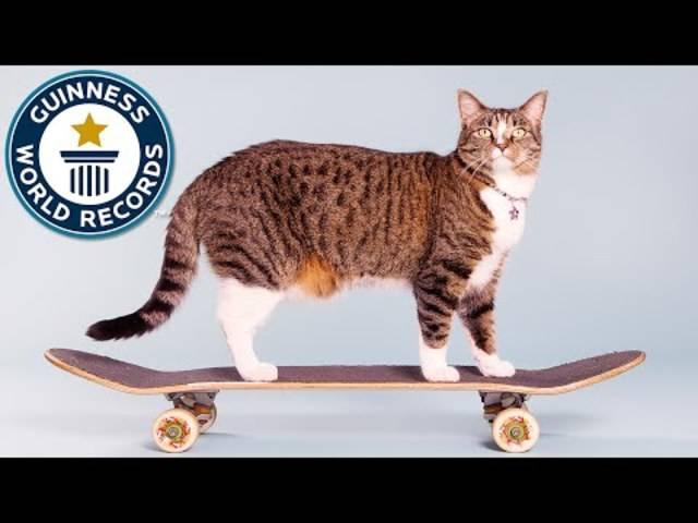 «Didga» kann auch Skateboard fahren – alle Tricks und wie es dazu kam im Video.