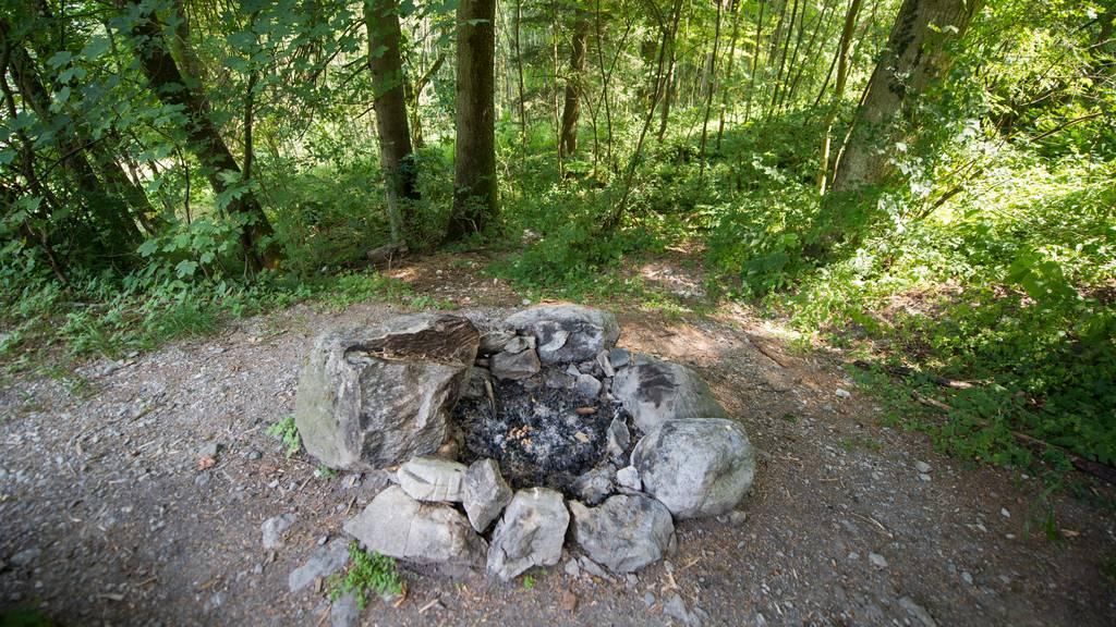 Wegen erhöhter Waldbrandgefahr haben mehrere Kantone ein Feuerverbot erlassen.