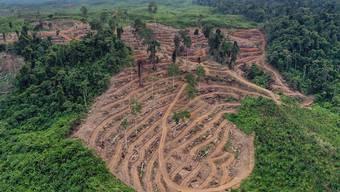 Gerodeter Wald für die Palmöl-Produktion in Indonesien. Der Nationalrat hat das Freihandelsabkommen mit Indonesien genehmigt, das ein Kapitel zur nachhaltigen Produktion enthält. (Themenbild)