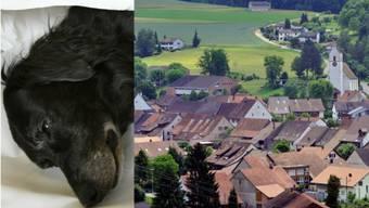 Toter Hund: Wer vergiftet in Hornussen Katz und Hund?
