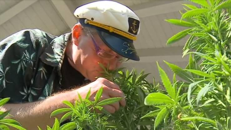 Pius Lischer mit seinen Cannabis-Pflanzen