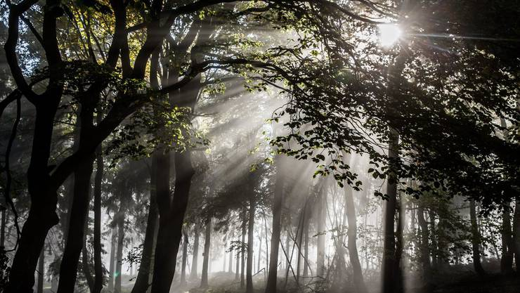 38 % des Gemeindegebietes sind Wald (2603 ha). Davon sind 979 ha im Eigentum der Bürgergemeinde. (Symbolbild)