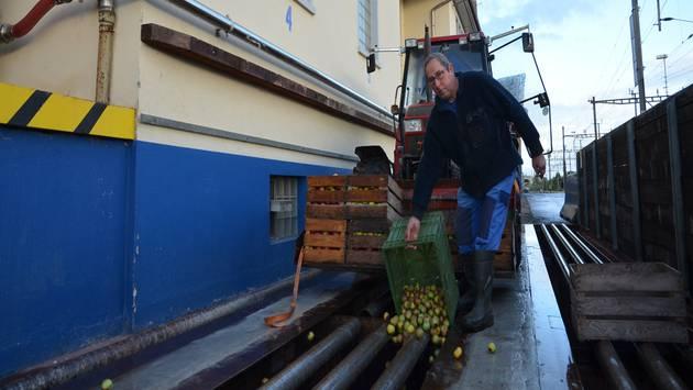 Bauer Guido Vollenweider aus Benzenschwil liefert eine erste Ladung Mostobst bei der Fremo Interdrink in Muri ab. ES