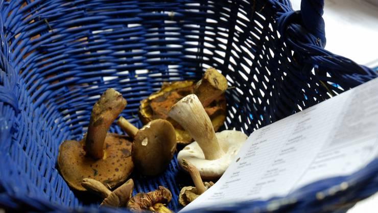 Ein luftdurchlässiger Korb ist für das «Pilzlen» am besten geeignet.  Landolt