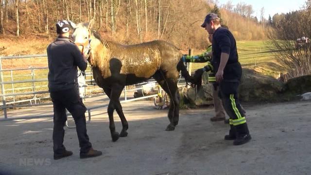 Pferd mit Kran aus Güllegrube in Biel gerettet