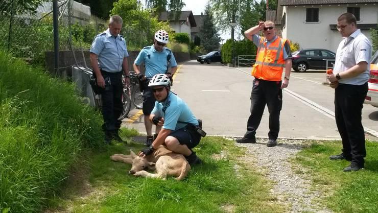 Das Tier wurde nach der Rettung dem Bauer übergeben.