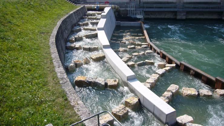 Am Raugerinne-Beckenpass in Wyhlen werden derzeit Fischzählungen durchgeführt.