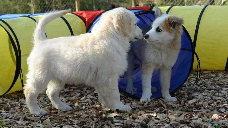 Treffen sich zwei Lunas, handelt es sich meist um Hunde – oder Katzen.