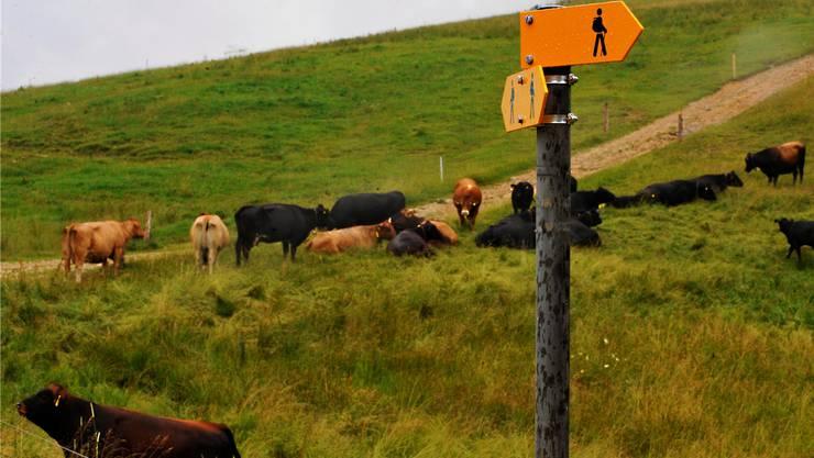 Heute sind die Wanderwege auf dem Weissenstein genauestens signalisiert. Stellenweise sind die Wanderer «eingehagt» und weniger die Kühe.