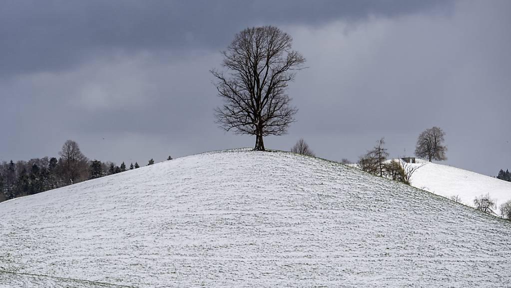Eine Kaltfront bringt den Winter zurück: Überzuckerte Landschaft in Sattel SZ am Mittwoch.