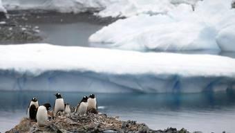 Der Anteil des schmelzenden Eises in der Antarktis wurde bisher unterschätzt. Mit dem steigenden Meeresspiegel nehmen in diesem Jahrhundert Risiken wie Fluten oder Küstenerosion deutlich zu. (Archivbild)