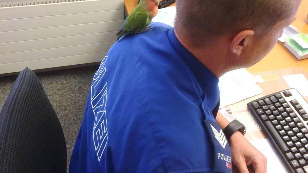 Der Vogel schaut dem Polizisten bei der Arbeit zu.