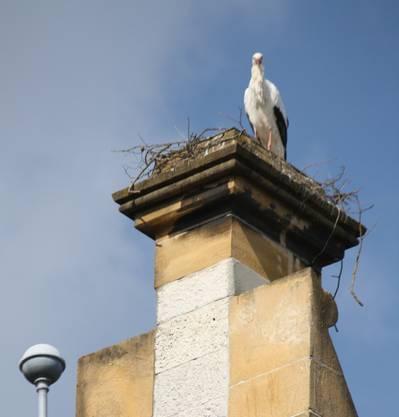 Oft wartet ein Vogel auf den Partner oder die Partnerin.