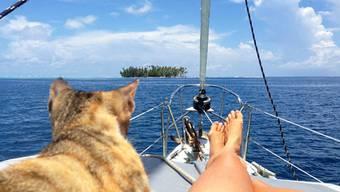 Diese Frau macht ihren Traum wahr und segelt mit ihrer Katze um die Welt