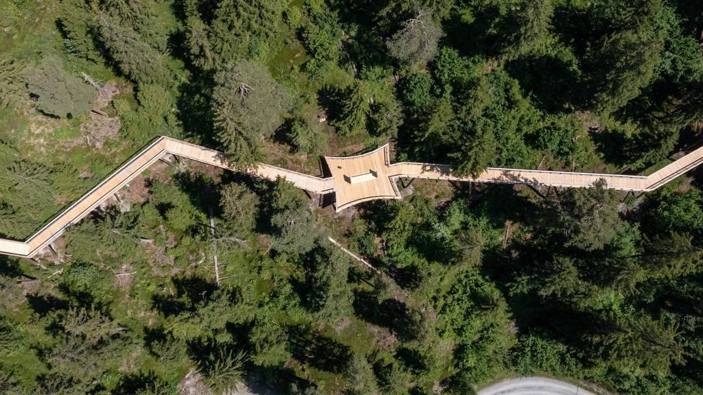 Virtual Reality und Rutschbahn: Längster Baumwipfelpfad der Welt eröffnet