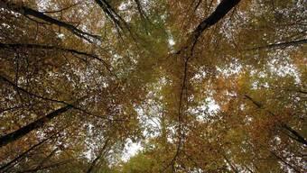 Wald bei Brugg (Symbolbild)