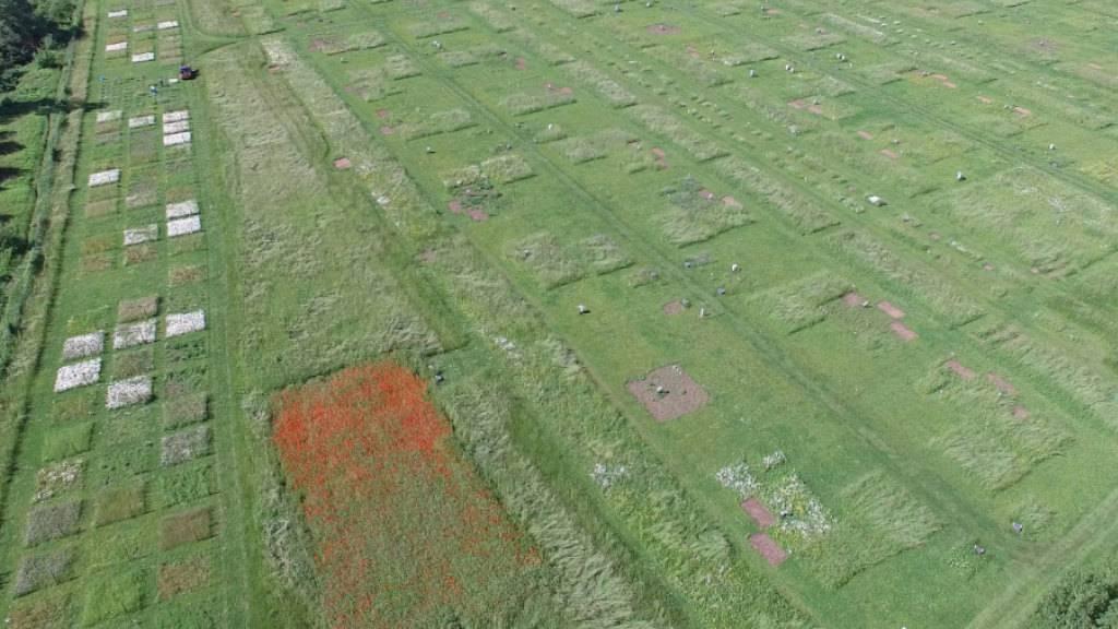 Luftaufnahme des Jena Experiments: Resultate von Versuchsflächen lassen sich auf die reale Natur übertragen.